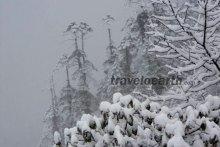 Bharat-Trivedi-Frozen