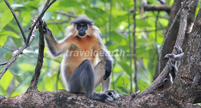 north east wildlife tour,north east wildlife tour packages,north east india wildlife packages,wildlife destinations of north east india,wildlife tour to north east india,manas national park,kaziranga national park