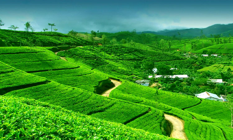 Exotic Sikkim & Darjeeling, 4 Nts/5 Dys @ Rs.7,777